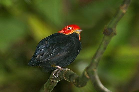 aves-panama-15