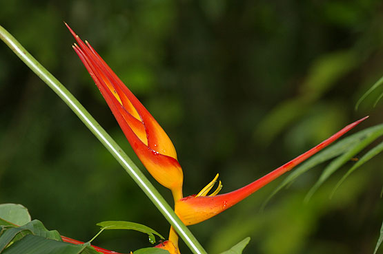 colores-selva-03
