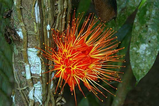 colores-selva-06