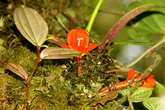 colores-selva-12