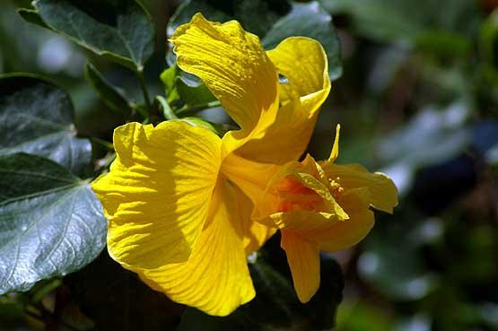 flores-panama-02
