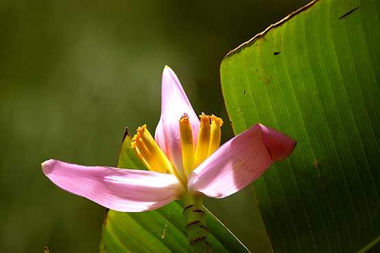 flores-panama-04