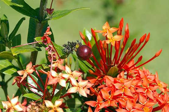 flores-panama-06