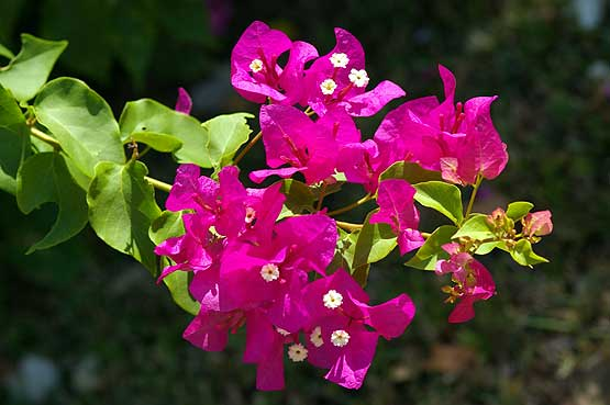 Flowers From Panama Travel Tips Tours amp Pictures