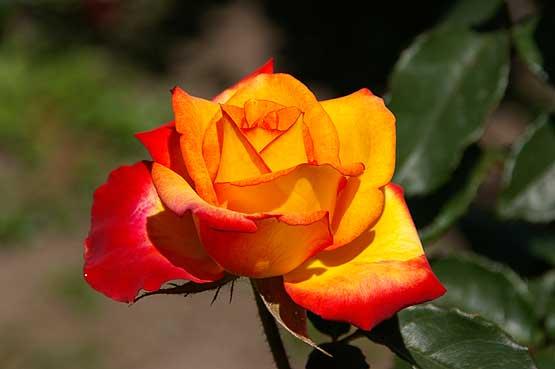 flores-panama-08