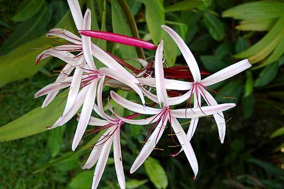 flores-panama-10
