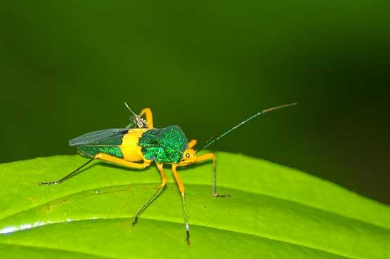 insectos-panama-02
