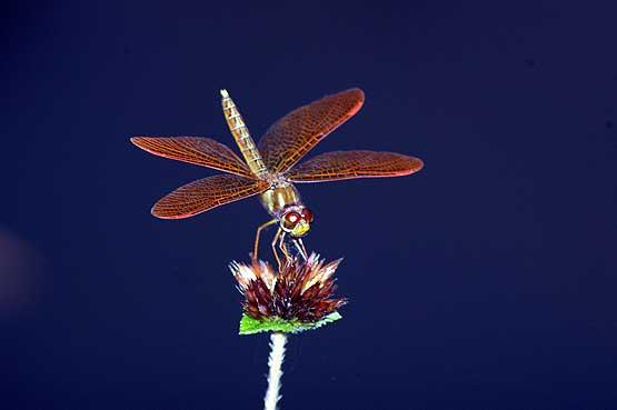 insectos-panama-03