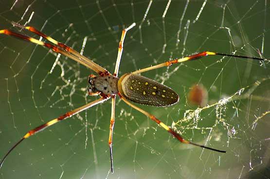 insectos-panama-04