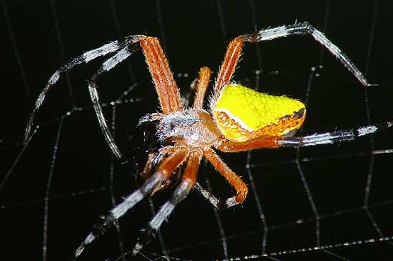 insectos-panama-05