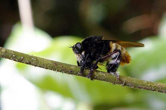 insectos-panama-06