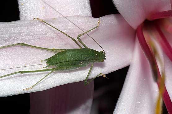 insectos-panama-07