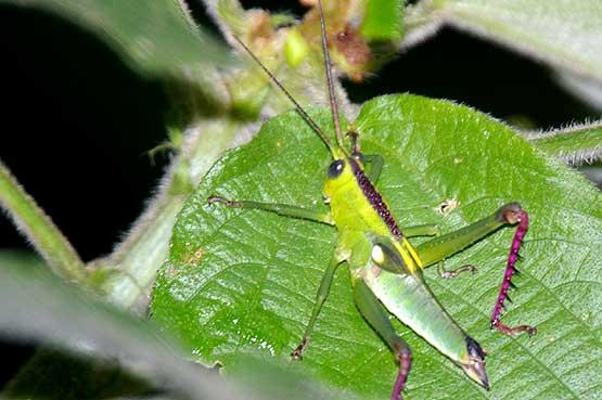 insectos-panama-08
