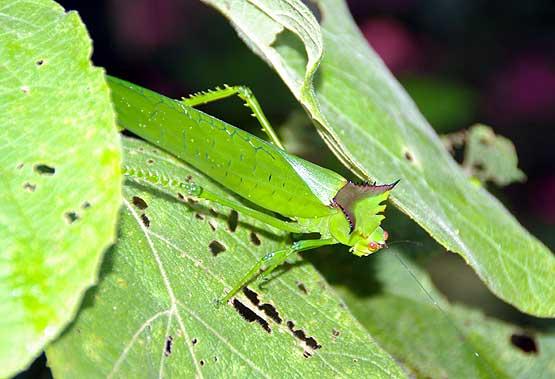 insectos-panama-09