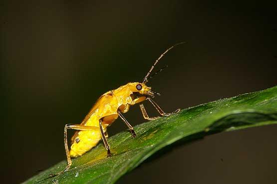 insectos-panama-10