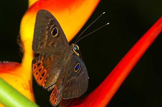 mariposas-panama-01