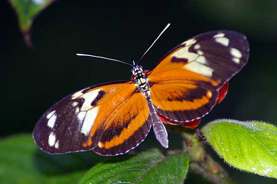 mariposas-panama-05