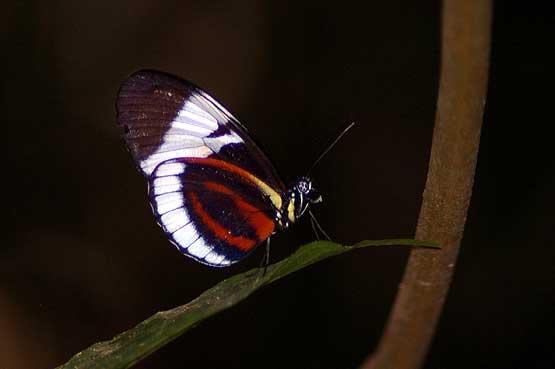 mariposas-panama-07