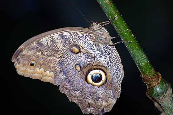 mariposas-panama-1102