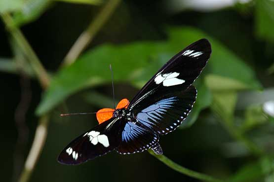 mariposas-panama-12
