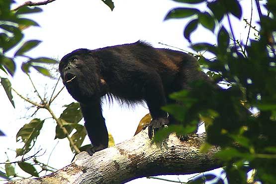 panama-wildlife-03