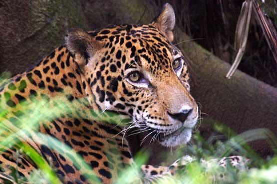 panama-wildlife-07