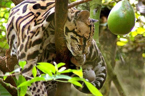 panama-wildlife-08