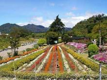 feria-flores-boquete